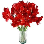 Bouquet of 7 Amaryllis - flowers and bouquets on roza.od.ua