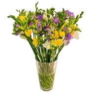Bouquet of 25 freesias - flowers and bouquets on roza.od.ua