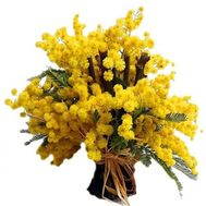 """Bouquet of mimosa"" in the online flower shop roza.od.ua"