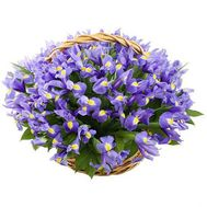 Basket of 51 iris - flowers and bouquets on roza.od.ua