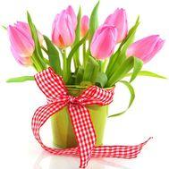 Тюльпаны в кашпо - цветы и букеты на roza.od.ua