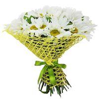 Ромашки - цветы и букеты на roza.od.ua