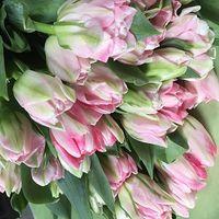 Букеты из тюльпанов - весенняя сказка - цветы и букеты на roza.od.ua