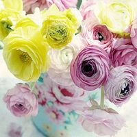 Spring birthdays. What flowers to choose - flowers and bouquets on roza.od.ua