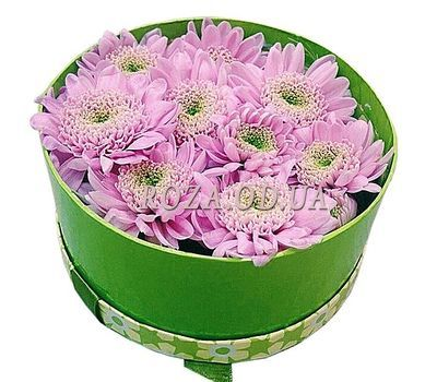 """Chrysanthemums in a box"" in the online flower shop roza.od.ua"