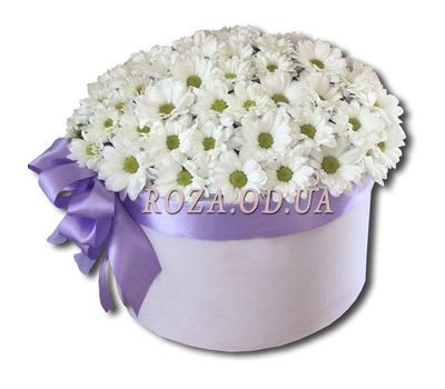 """A bouquet of camomiles in a box"" in the online flower shop roza.od.ua"