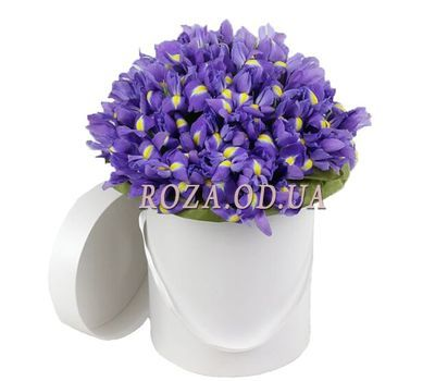 """101 iris in a box"" in the online flower shop roza.od.ua"