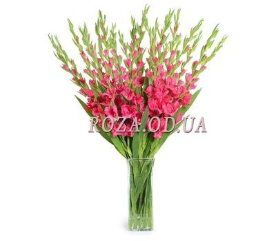 """19 pink gladioli"" in the online flower shop roza.od.ua"