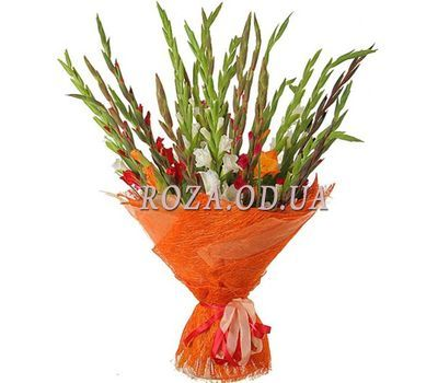 """25 multi-colored gladiolus gladiolus"" in the online flower shop roza.od.ua"