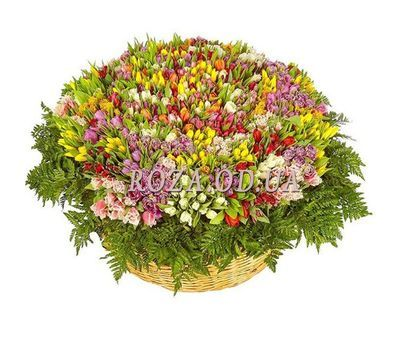 """501 tulip"" in the online flower shop roza.od.ua"