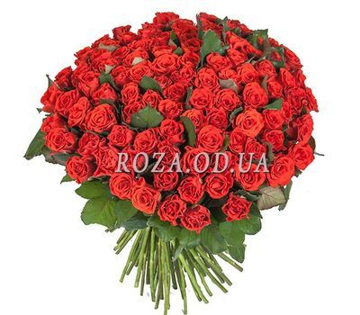 """101 roses of El Toro"" in the online flower shop roza.od.ua"