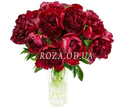 """15 claret pions"" in the online flower shop roza.od.ua"