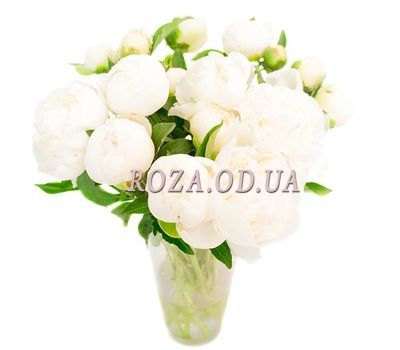 """""""17 white pions"""" in the online flower shop roza.od.ua"""