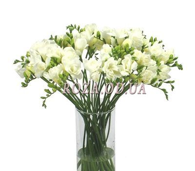 """Bouquet of 35 freesias"" in the online flower shop roza.od.ua"