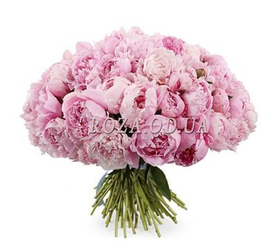 """""""Luxurious Bouquet of Peonies"""" in the online flower shop roza.od.ua"""