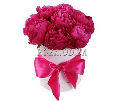 """11 burgundy peonies in a box"" in the online flower shop roza.od.ua"