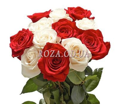 """""""11 red and white roses"""" in the online flower shop roza.od.ua"""