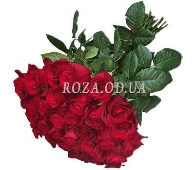 """31 красная импортная роза"" в интернет-магазине цветов roza.od.ua"