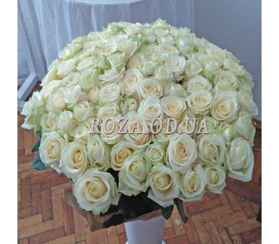 """101 white rose 60 cm - view 1"" in the online flower shop roza.od.ua"