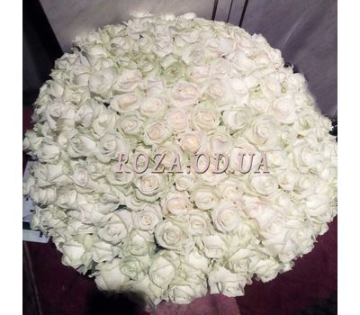 """101 white rose 60 cm - view 3"" in the online flower shop roza.od.ua"
