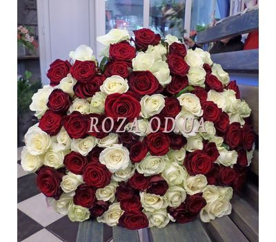 """101 rose red and white - view 2"" in the online flower shop roza.od.ua"