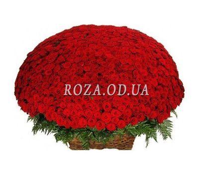 """1001 красная роза"" в интернет-магазине цветов roza.od.ua"
