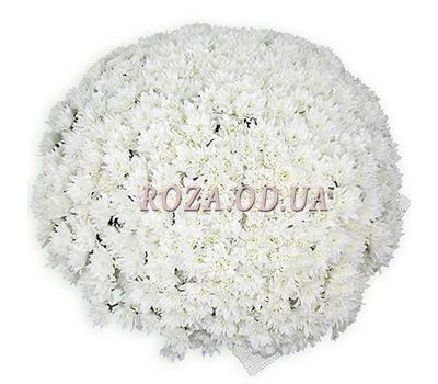 """101 white chrysanthemum"" in the online flower shop roza.od.ua"