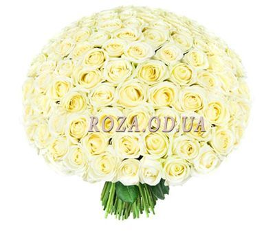"""Bouquet of 201 white roses"" in the online flower shop roza.od.ua"