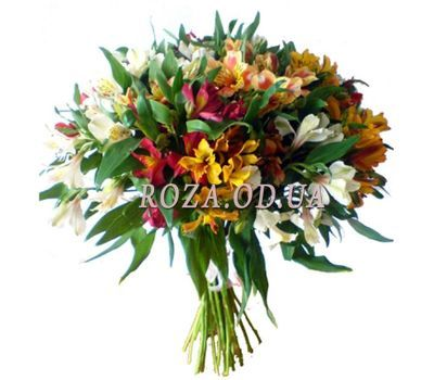 """25 multi-colored alstromeries"" in the online flower shop roza.od.ua"