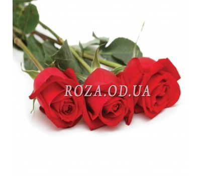 """3 imported roses"" in the online flower shop roza.od.ua"