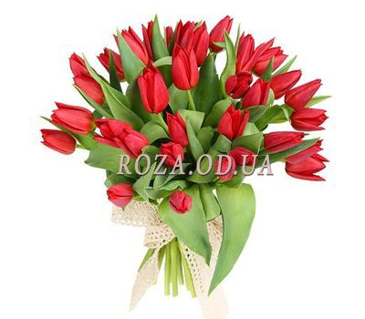 """35 red tulips"" in the online flower shop roza.od.ua"