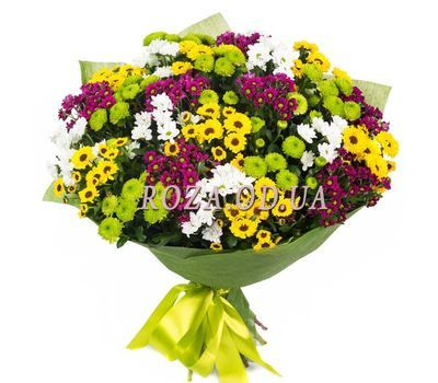 """35 multi-colored chrysanthemums"" in the online flower shop roza.od.ua"