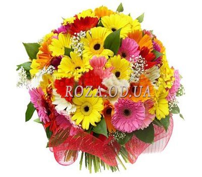 """45 multi-colored gerberas"" in the online flower shop roza.od.ua"