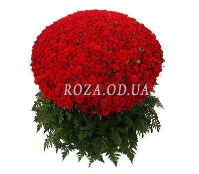 """501 красная роза"" в интернет-магазине цветов roza.od.ua"