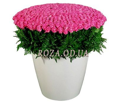 """501 pink rose"" in the online flower shop roza.od.ua"