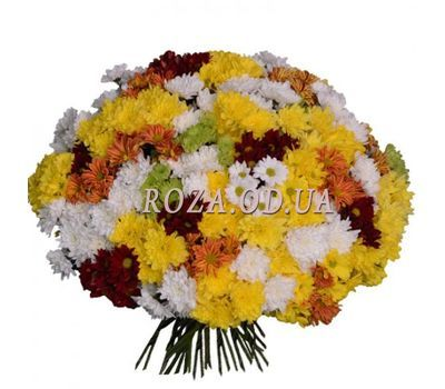 """""""51 chrysanthemums"""" in the online flower shop roza.od.ua"""