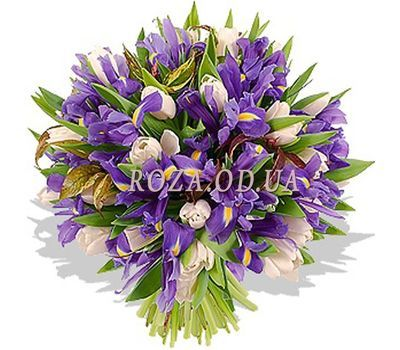 """51 tulips and irises"" in the online flower shop roza.od.ua"