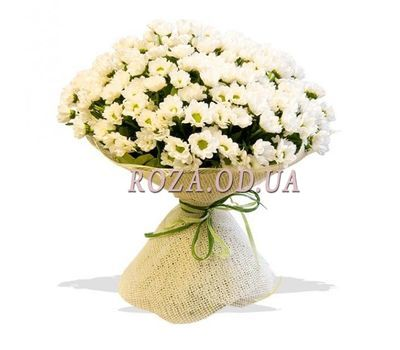 """Bouquet of 35 chrysanthemums"" in the online flower shop roza.od.ua"