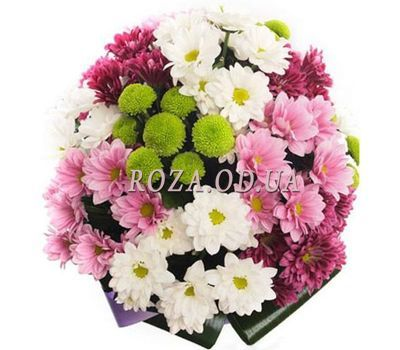 """Bouquet of 13 chrysanthemums"" in the online flower shop roza.od.ua"
