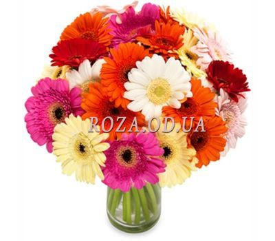 """Bouquet of 25 gerberas"" in the online flower shop roza.od.ua"
