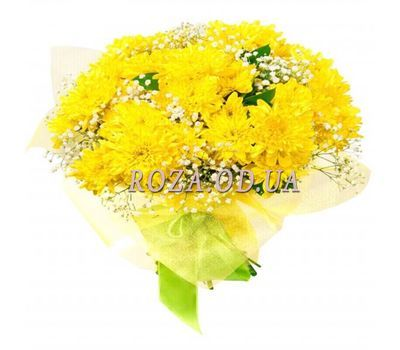 """13 chrysanthemums"" in the online flower shop roza.od.ua"