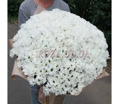 """101 white chrysanthemum - 1"" in the online flower shop roza.od.ua"