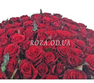 """101 red rose 80 cm 2"" in the online flower shop roza.od.ua"