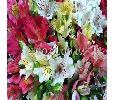 """101 multi-colored alstroemerias 3"" in the online flower shop roza.od.ua"