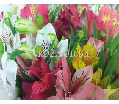 """101 multi-colored alstroemerias 4"" in the online flower shop roza.od.ua"