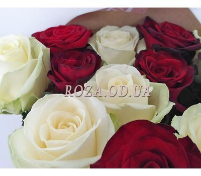 """""""1 red and white roses 1"""" in the online flower shop roza.od.ua"""
