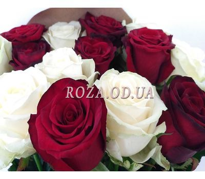 """""""1 red and white roses 2"""" in the online flower shop roza.od.ua"""