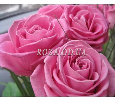 """""""11 pink roses 1"""" in the online flower shop roza.od.ua"""