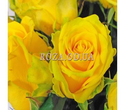 """11 yellow roses 1"" in the online flower shop roza.od.ua"