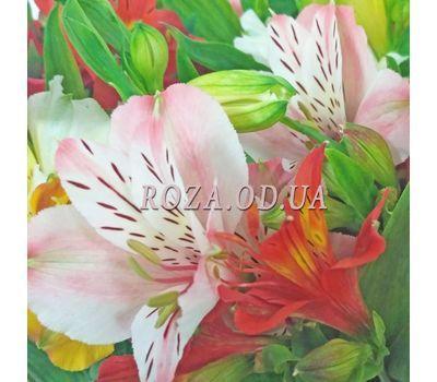 """19 alstromeries 2"" in the online flower shop roza.od.ua"